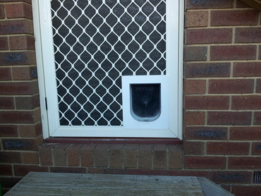 Outside view of the cat door