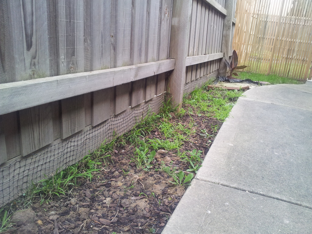 Image Result For Can Dogs Escape
